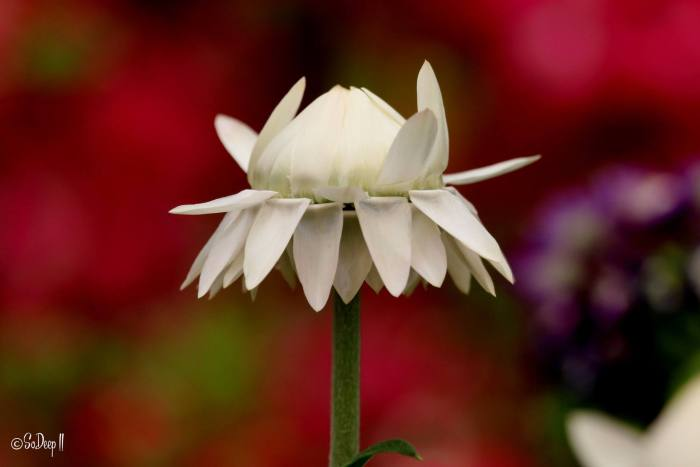 Fleur Vicky