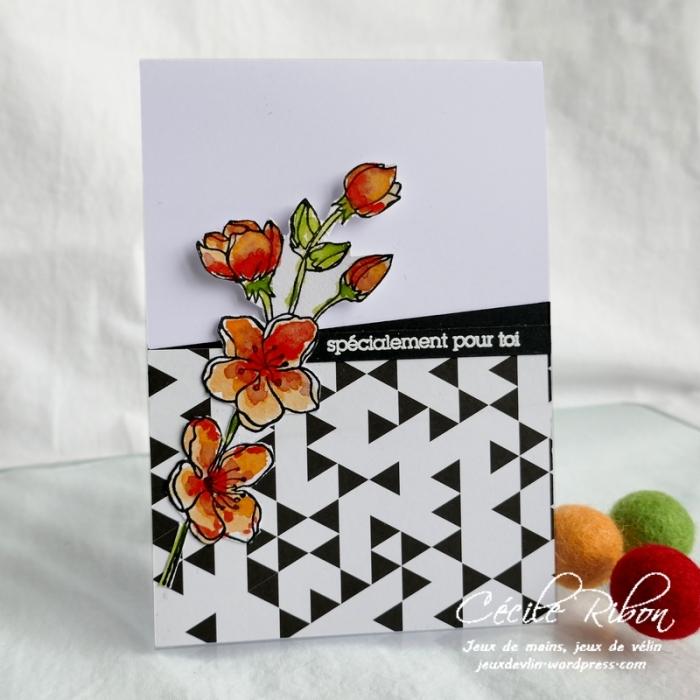 Carte CTD596 - P1170721
