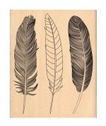 trois-plumes
